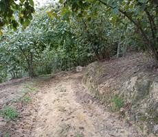 Düzce Akçakoca Aktaş Köyünde Satılık Fındıklık
