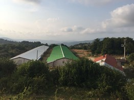Bolu Kuzfındık'da 10,240 m² Satılık Tavuk Çiftliği