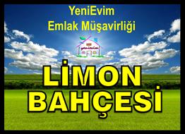 YeniEvim'den Tarsus'ta Satılık 60 Dönüm LİMON BAHÇESİ.
