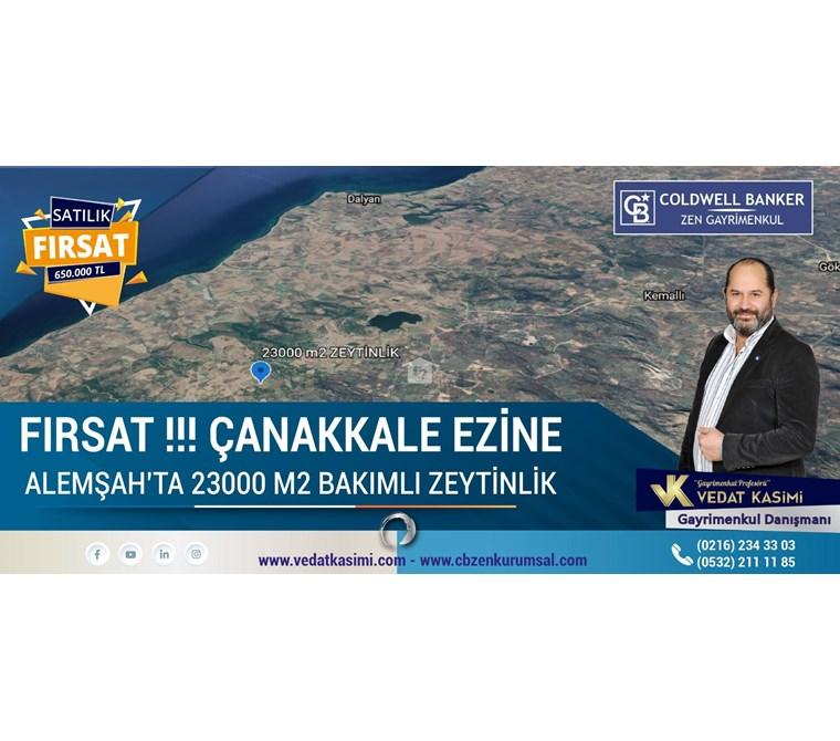 Fırsat !!! Çanakkale Ezine Alemşah'ta 23000 m2 Bakımlı Zeytinlik