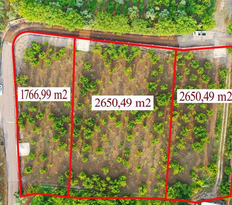 Kemalpaşa M. Akif Ersoy'da Satılık 2.650 m2 Kirazlık