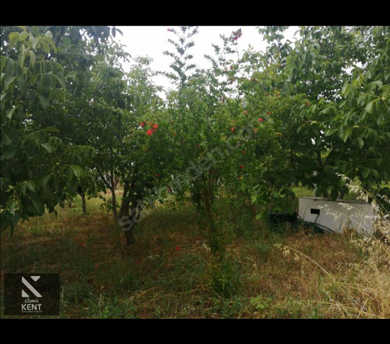 Kemalpaşa Aşağıkızılca Ovasında Satılık 6300 m2 Bahçe