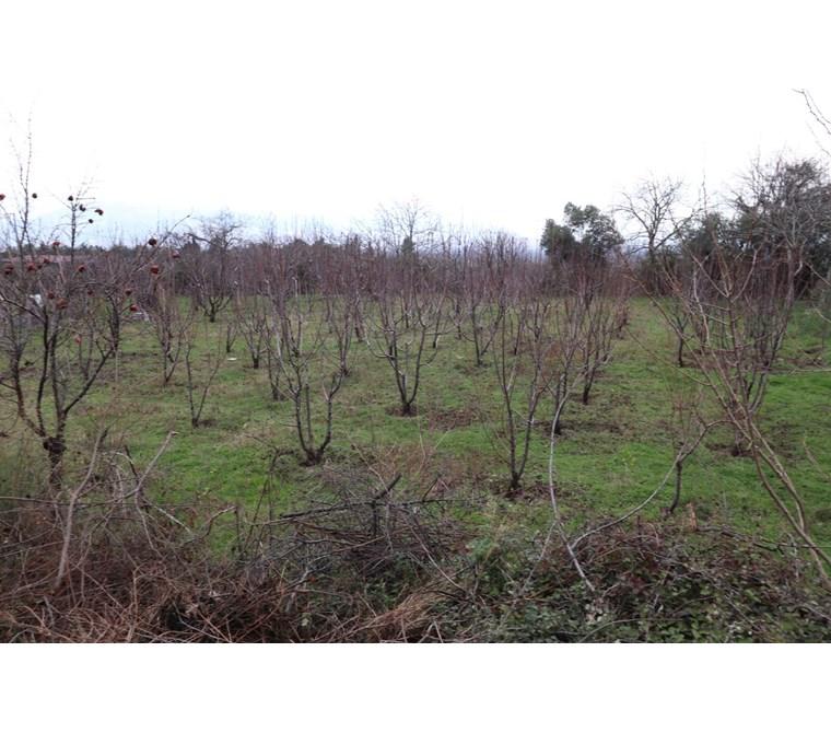 Kemalpaşa Bağyurdu'nda Satılık 1300 M2 Bahçe