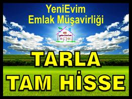 YeniEvim'den SEYHAN BÜYÜKDİKİLİ'de 90 DÖNÜM SULU TARLA