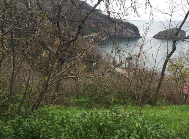 Ordu Perşembe Çakada Deniz Cepheli 3695m2 Satılık Fındık Bahçesi
