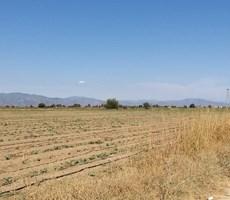 Torbalı'da (SATILIK) Çok Verimli Arazi