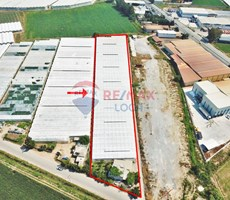 REMAX LOCA MERSİN KAZANLI'DA MUZ SERASINA UYGUN 12.500 M2 TARLA