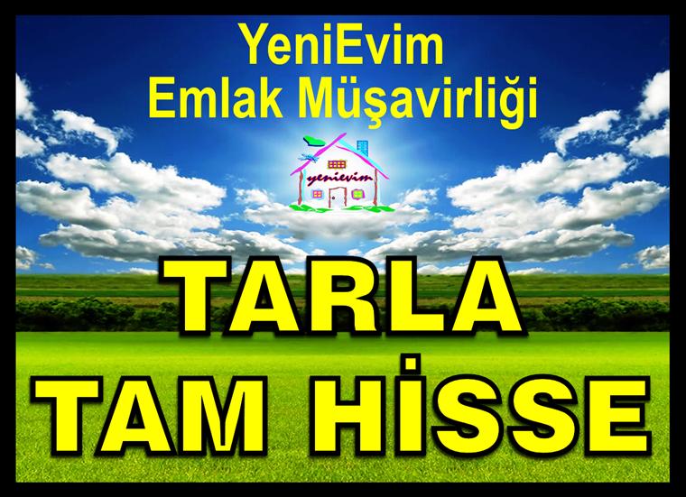 TARSUS YARAMIŞ'TA SULAMA KANALI+YOL+ELEKTRİK SATILIK TAM HİSSE.