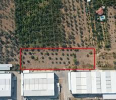 Kemalpaşa Armutlu'da Kiralık 4.985 m2 Arazi