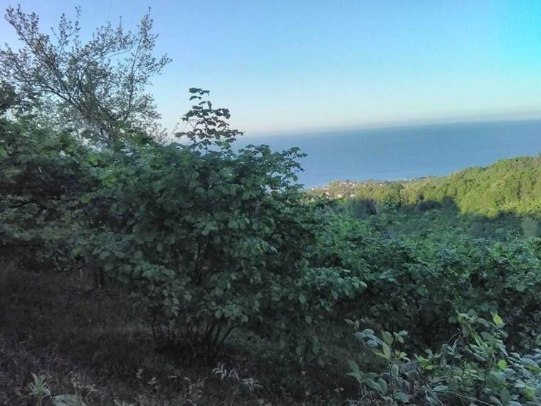 Satılık Bahçe Ordu Perşembe Çaytepe Köyü 7705 m2