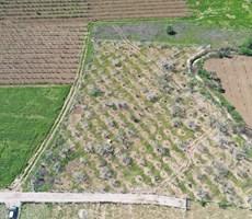 Kemalpaşa Aşağı Kızılca'da Satılık 3.889,20 m2 Bahçe