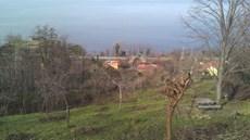 Ordu Perşembe Çaytepe 5517m2 Satılık Fındık Bahçesi