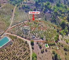REMAX LOCA KAVAKLIPINAR'DA 10 YAŞINDA 7,040 m2 ŞEFTALİ BAHÇESİ