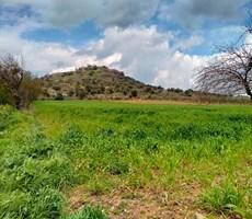 Bergama'da Yatırım Firsatı! Cazip Fiyata Acele Satılık Zeytinlik
