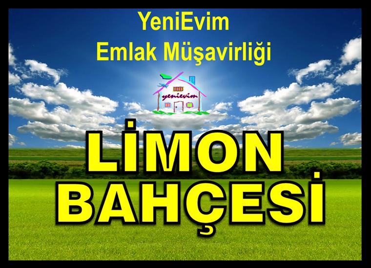 Tarsus Yenice Don Vurmayan Kanal Sulamalı Verimli Limon Bahçesi